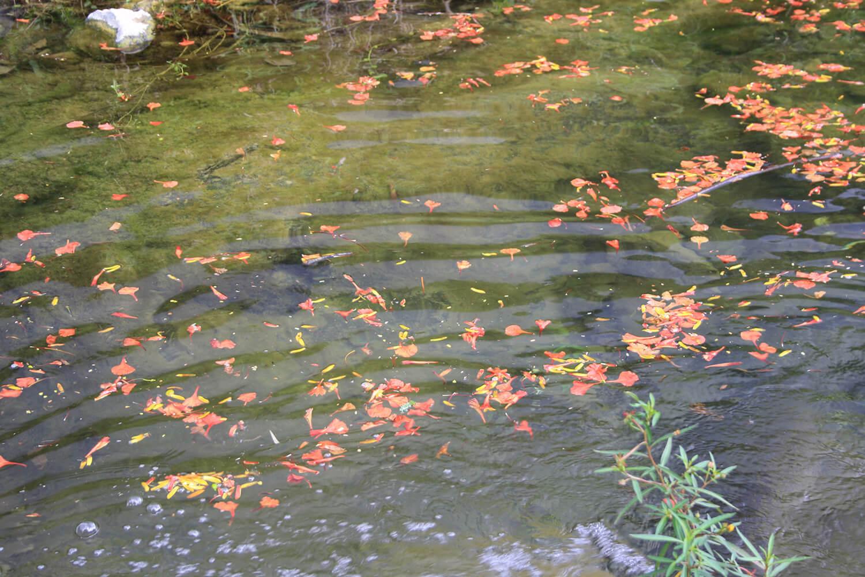 Camara Chica: Flamboyant water